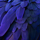 Beautiful Parrot Feathers Stock Images