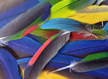 Beautiful Parrot Feathers Stock Photography