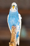 Beautiful parrot 1 Stock Photo