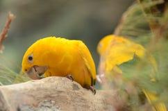 Beautiful parrot in Loro Park in Puerto de la Cruz on Tenerife, Canary Islands Stock Photography