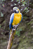 Beautiful parrot in nature. Beautiful color parrot in nature Stock Photo
