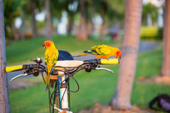 Beautiful parrot,sun conure Royalty Free Stock Images