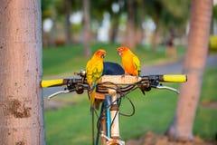Beautiful parrot,sun conure Royalty Free Stock Photo