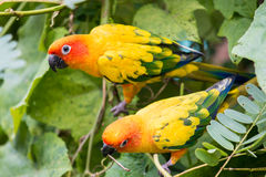 Beautiful parrot Royalty Free Stock Image