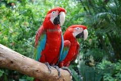 Beautiful Parrots In Sentosa Park, Singapore