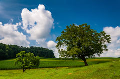 Beautiful partly-cloudy summer sky over trees and farm fields Royalty Free Stock Photography