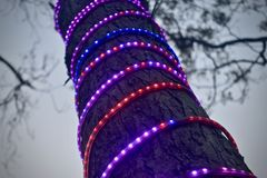 Party lights tied with a large tree parts stock photo royalty free stock photos