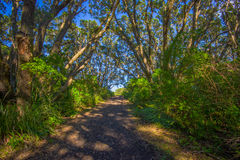 Beautiful passage way to the mountain at volcanic Rangitoto Island, in a sunny day perfect for hiking Royalty Free Stock Photo