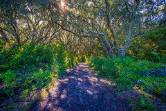 Beautiful passage way to the mountain at volcanic Rangitoto Island, in a sunny day perfect for hiking Royalty Free Stock Photos