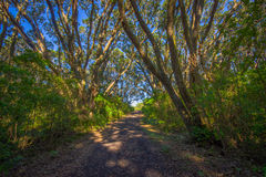 Beautiful passage way to the mountain at volcanic Rangitoto Island, in a sunny day perfect for hiking Royalty Free Stock Photography