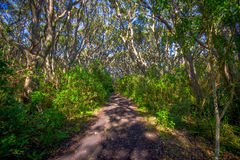 Beautiful passage way to the mountain at volcanic Rangitoto Island, in a sunny day perfect for hiking Stock Photo