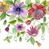 Beautiful passion flowers passiflora with green leaves on white background. Seamless floral pattern. Watercolor painting. Hand drawn and painted illustration royalty free illustration