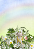 Beautiful pastel background with spring flowers Royalty Free Stock Photography
