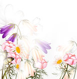 Beautiful pastel floral background with clean space and light Royalty Free Stock Photo