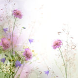Beautiful pastel floral border. Blurred background (shallow depth of field Stock Photography