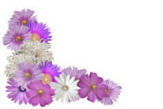 Beautiful Pastel Flower Border Royalty Free Stock Photo