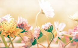 A beautiful pastel flowers background stock images