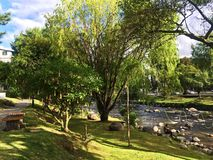 Angel`s Trumpet Flower Trees Along River Bank in Cuenca stock photos