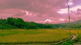 Beautiful pastel of rice fields and greenery extends. stock photography