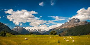 Beautiful Pastoral Alpine Landscape in New Zealand. Pastoral New Zealand Landscape scene with snow-capped mountains and meadows with sheep from the remote Royalty Free Stock Photography