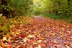 Beautiful path with colorful foliage. Beautiful path covered with colorful foliage stock image