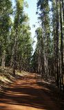 Way in the eucalyptus forest in red soil stock image
