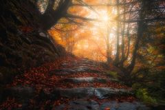 Beautiful path in the forest at autumn stock photo