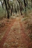 Beautiful path in the forest Royalty Free Stock Photography