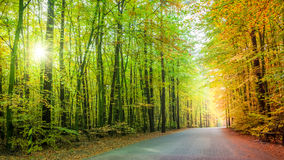 Beautiful path in the forest in Poland Royalty Free Stock Image