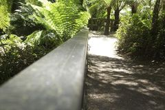Beautiful path in the forest with wooden railings Melbourne Australia nice. Beautiful path in the forest with wooden railings Melbourne Australia Stock Photography