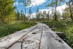 A beautiful path through a great bog in Storfors sweden. September 2018 stock images