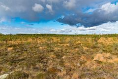 A beautiful path through a great bog in Storfors sweden. September 2018 royalty free stock photo