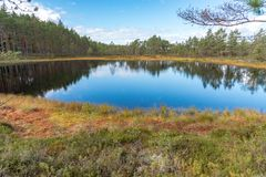 A beautiful path through a great bog in Storfors sweden. September 2018 royalty free stock photography