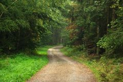 Beautiful path in a green forest Royalty Free Stock Photos
