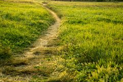 Beautiful  path in a green summer field. Grass stock image
