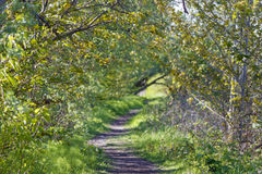 Beautiful Path in Nature Royalty Free Stock Image