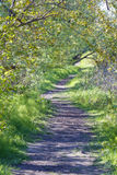 Beautiful Path in Nature Stock Image