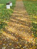 Walking path and autumn leaves Stock Images