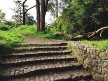 Beautiful Path. San Francisco Nature royalty free stock images