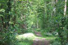 Beautiful path in spring in the forest. Sunlight on the flowers Royalty Free Stock Photography