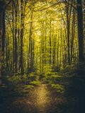 Beautiful path in summer forest royalty free stock photo