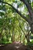 Beautiful path through tropical rain forest leading to Honolua Bay beach, Maui, Hawaii Stock Images