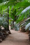 Path in the Jungles. Beautiful path in valley De Mai reserve surrounded by palms in Praslin island, Seychelles royalty free stock photo