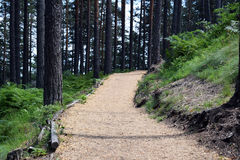 Beautiful path for walking and jogging in the forest.  Royalty Free Stock Photography