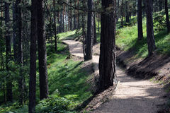 Beautiful path for walking and jogging in the forest.  Stock Photos