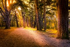 Beautiful path way through Aviemore forest in late summer with shadows and sun spots. On the dirt gravel path way royalty free stock image