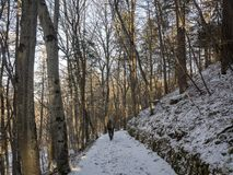 Path in the wood. Beautiful path in the wood. snow is every where and trees are naked and branches too Stock Image