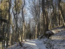 Sun in the wood. Beautiful path in the wood. snow is every where and trees are naked and branches too stock photo
