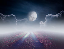 Beautiful pathway path to tranquil nighttime sky. Attractive photo of a nightly sky with large moon would make a great background. Idyllic rural view of pretty royalty free stock photo