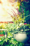 Beautiful patio flowers pot on balcony or terrace in sunset light. Urban container gardening. Flowers planter ideas royalty free stock photo